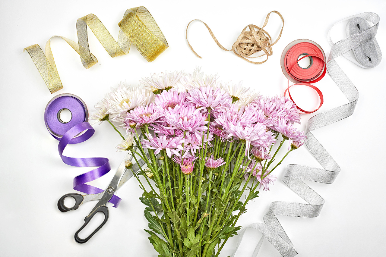 Images Scissors Flowers Chrysanths Ribbon Gray background Mums flower Chrysanthemums