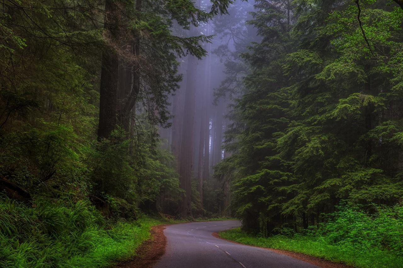 Обои сша, туман, национальный парк редвуд, калифорния. Природа foto 7