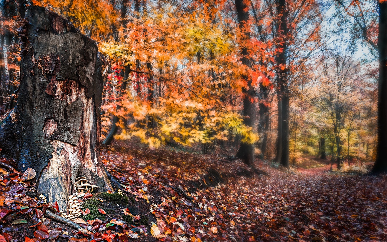 Photo Leaf Bokeh Autumn Nature Forests Tree stump Foliage blurred background forest