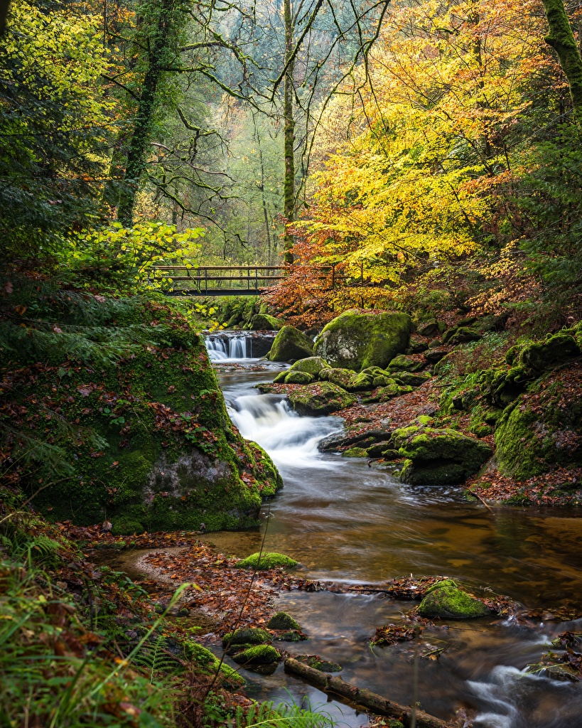Photo Germany Black Forest, Baden-Baden Autumn Creeks Nature Bridges forest Moss stone Trees  for Mobile phone Creek brook bridge Stream Streams Forests Stones
