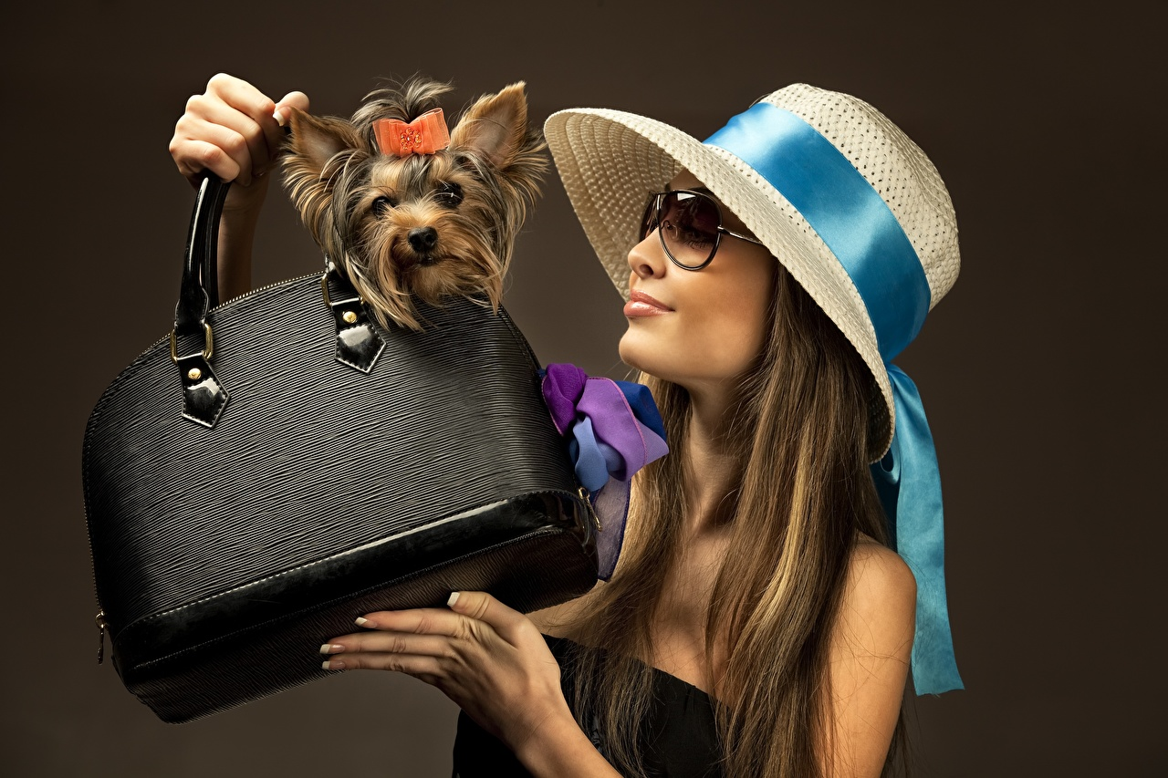 Image Yorkshire terrier Dogs Hat Girls Hands Handbag eyeglasses Colored background dog female young woman purse Glasses