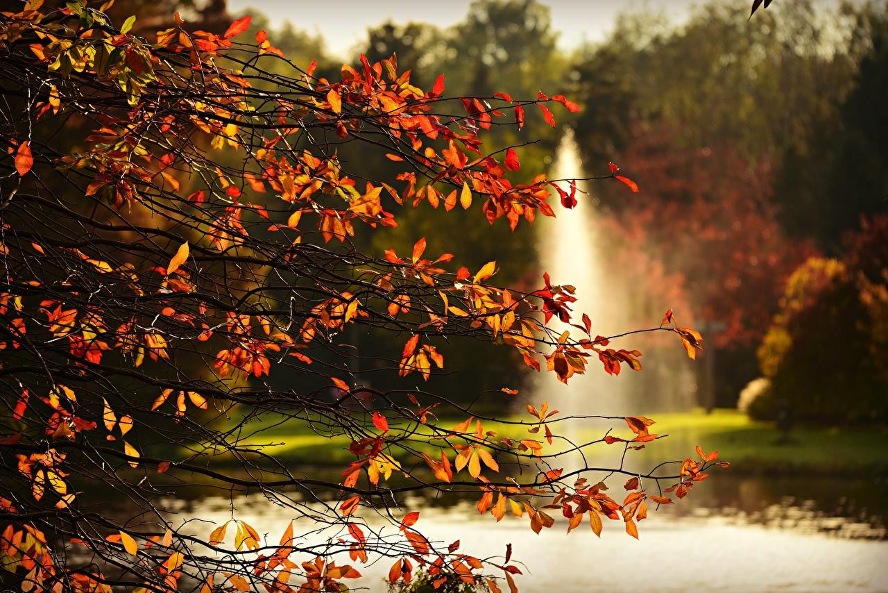 Foto Blatt Natur Herbst Ast Blattwerk