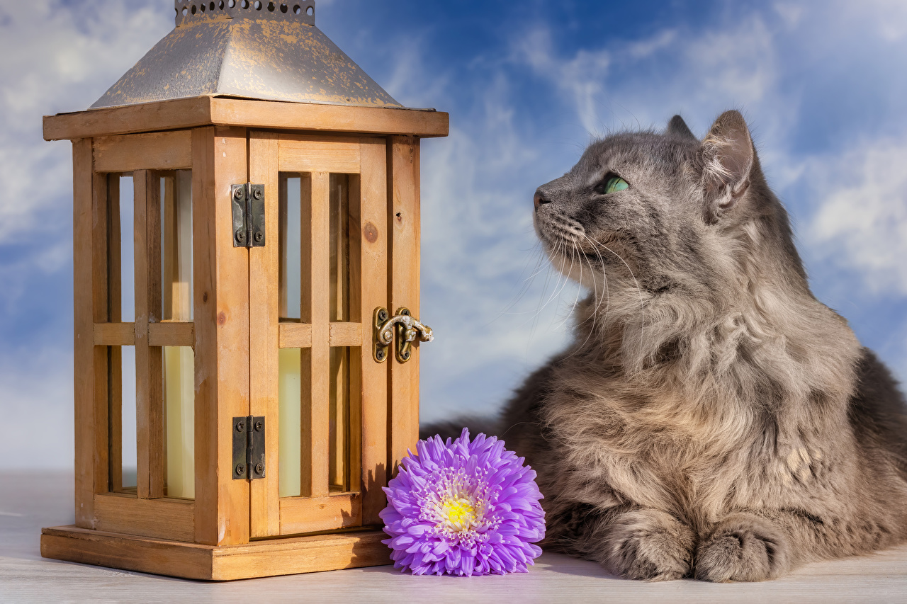 Photos Cats Asters Flowers Animals cat flower animal