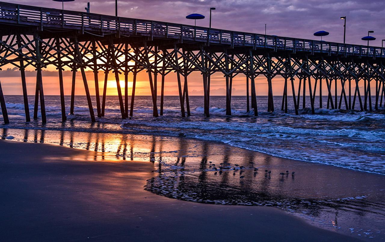 Foto Kalifornien Vogel Vereinigte Staaten Garden City Beach Natur Brücke Wasserwelle Morgendämmerung und Sonnenuntergang Küste Vögel USA Brücken Sonnenaufgänge und Sonnenuntergänge