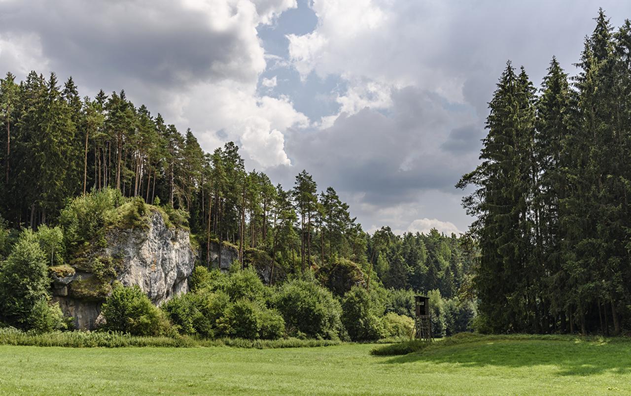 Images Bavaria Germany Hollfeld Crag Nature Forests Grass Shrubs Rock Cliff Bush