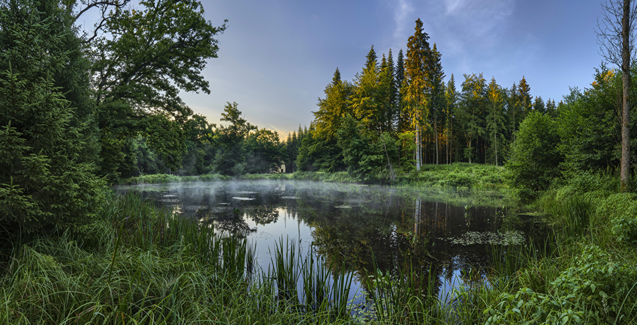 Images Bavaria Germany Augsburg Nature Lake Forests Grass forest