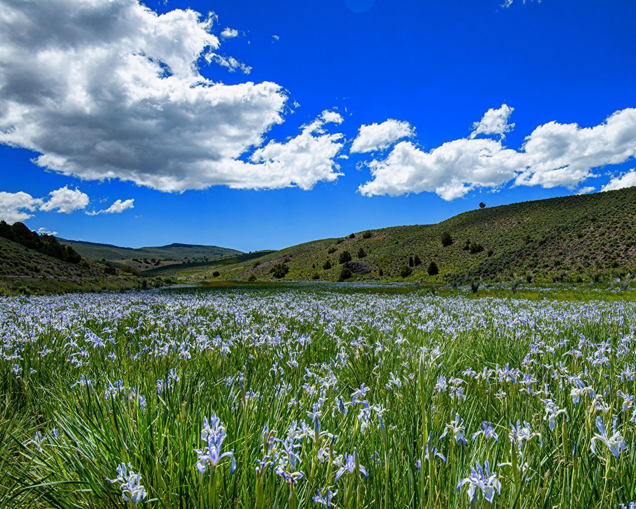 Images California USA Bridgeport Nature Sky Hill Irises Grasslands Clouds iris Meadow