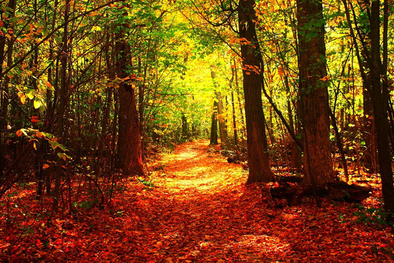 desktop hintergrundbilder natur herbst wälder bäume