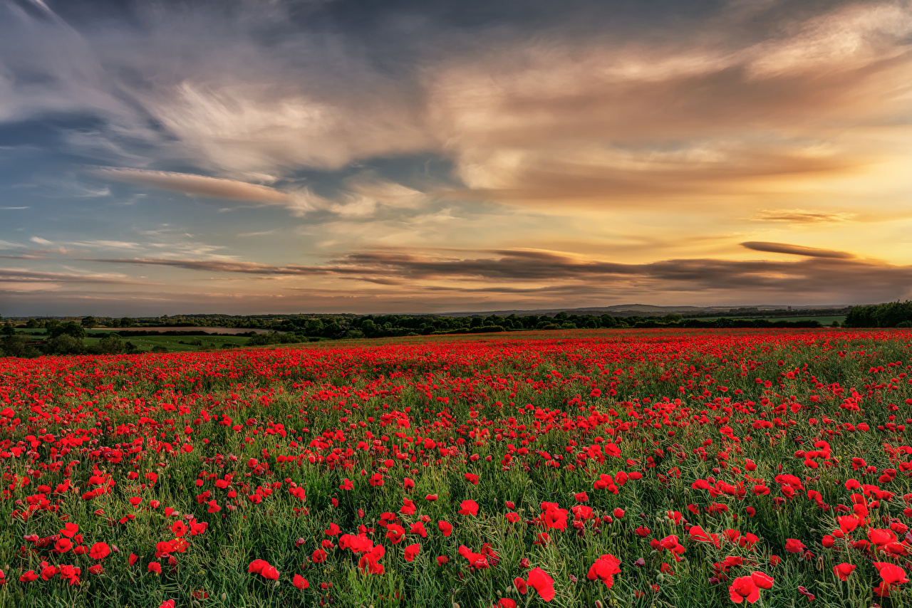 Wallpaper England County Durham Nature Sky Fields Poppies sunrise and sunset papaver Sunrises and sunsets