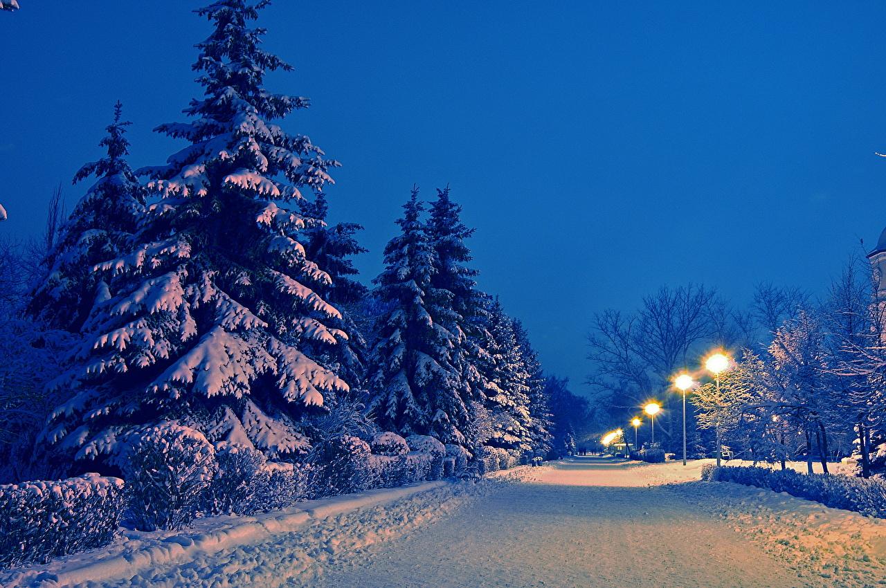 Estaciones del año Invierno Carreteras Nieve Noche árboles Naturaleza
