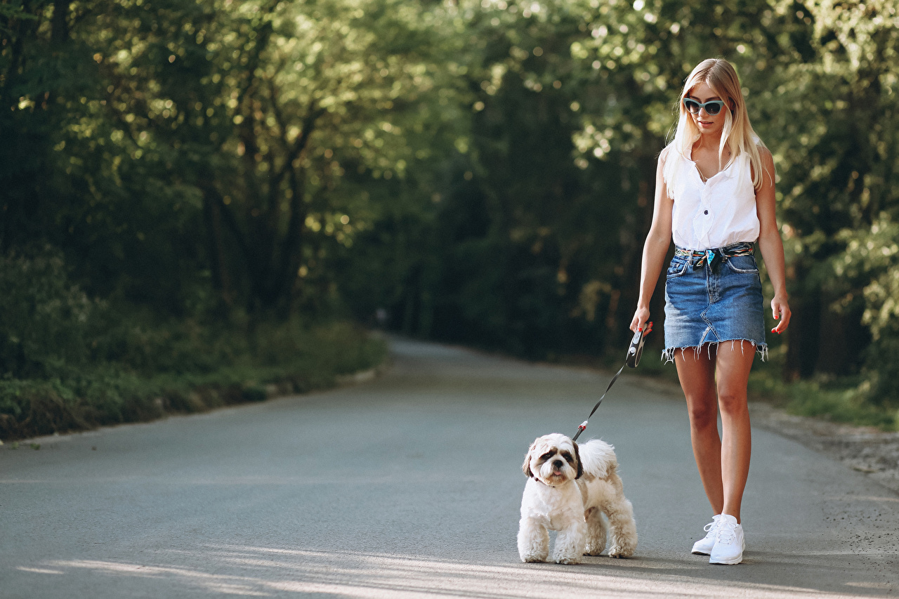 Desktop Wallpapers Bolognese Dogs Blonde girl blurred background Girls Stroll Glasses dog Bokeh walk female Walking young woman eyeglasses