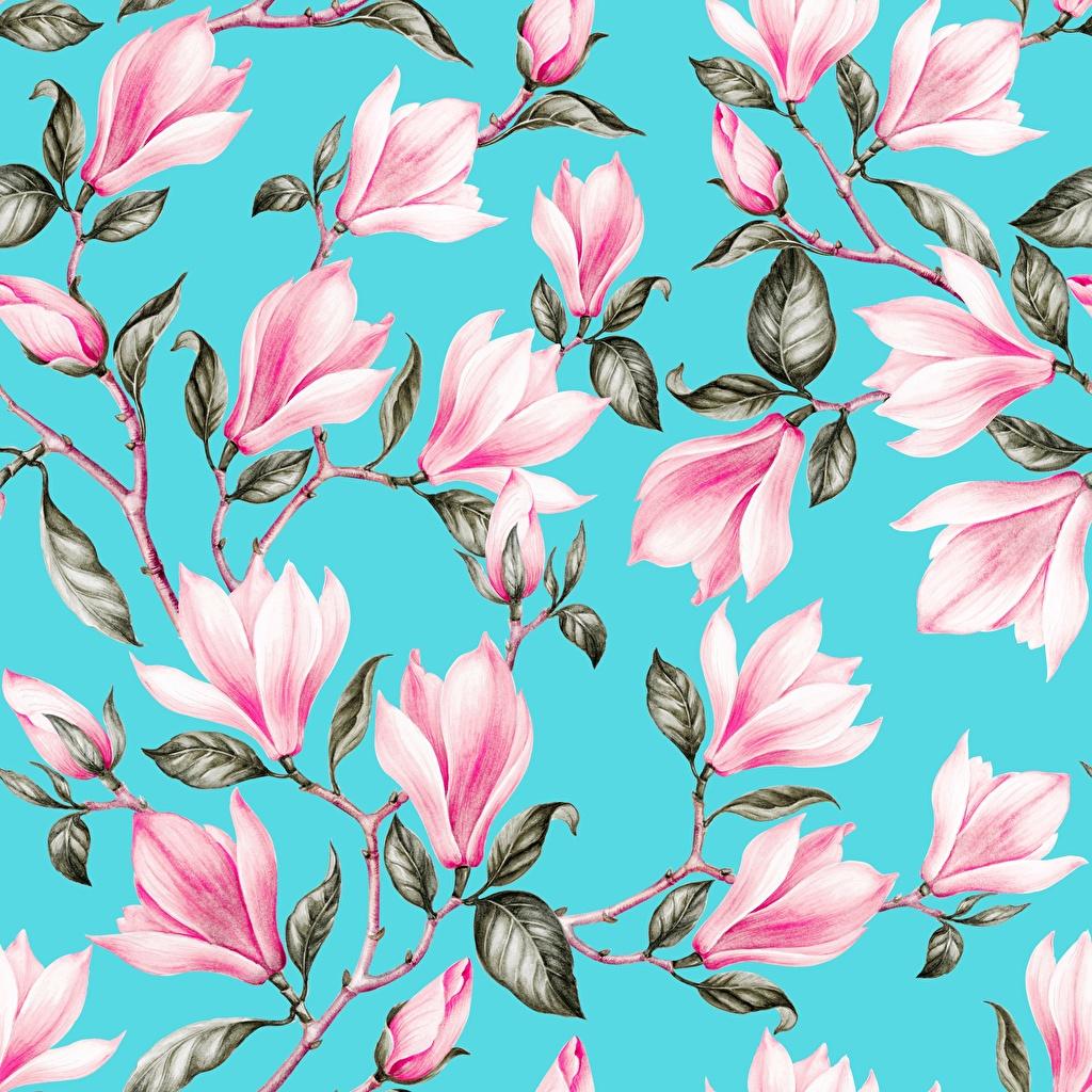 Bilder Textur Blattwerk Hellblau Rosa Farbe Blüte Magnolien Ast Gezeichnet Blatt Blumen