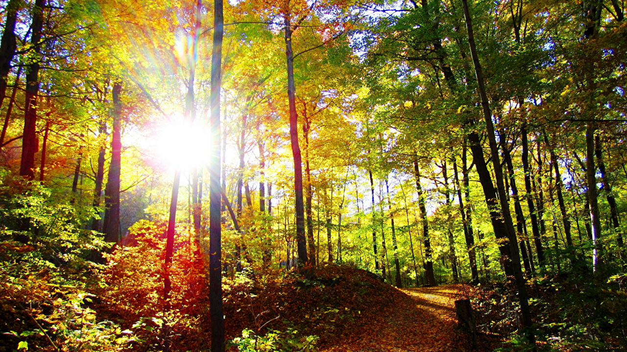 Bosques Otoño árboles Sol Senda Rayos de luz bosque Naturaleza