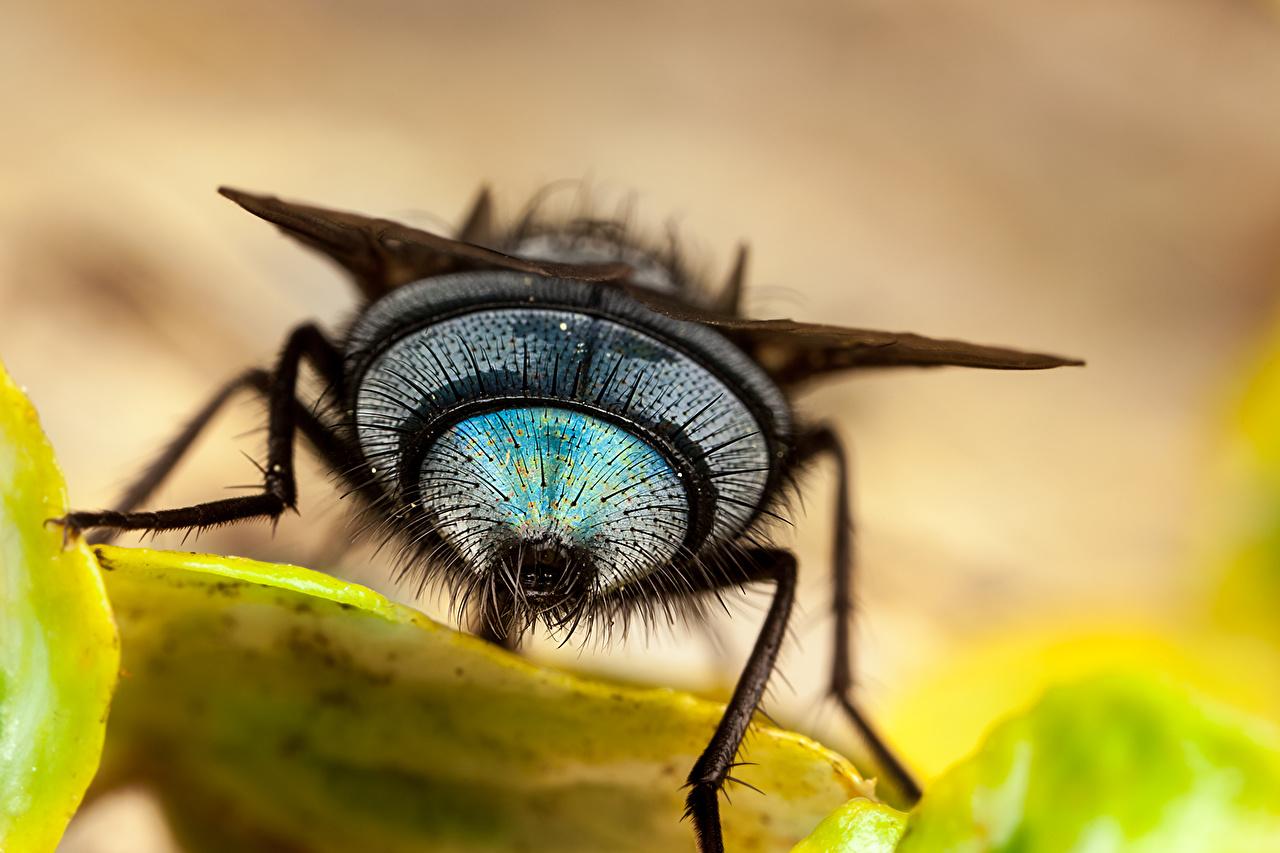 Fotos Fliegen Makrofotografie hautnah ein Tier Makro Tiere Nahaufnahme Großansicht