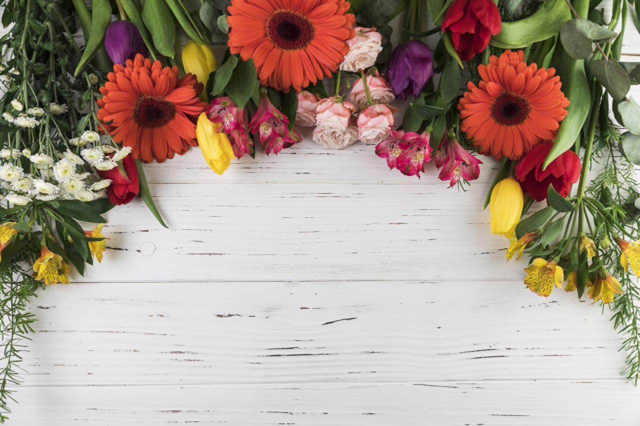 Photos Roses tulip gerbera flower Alstroemeria Template greeting card Wood planks rose Tulips Gerberas Flowers boards