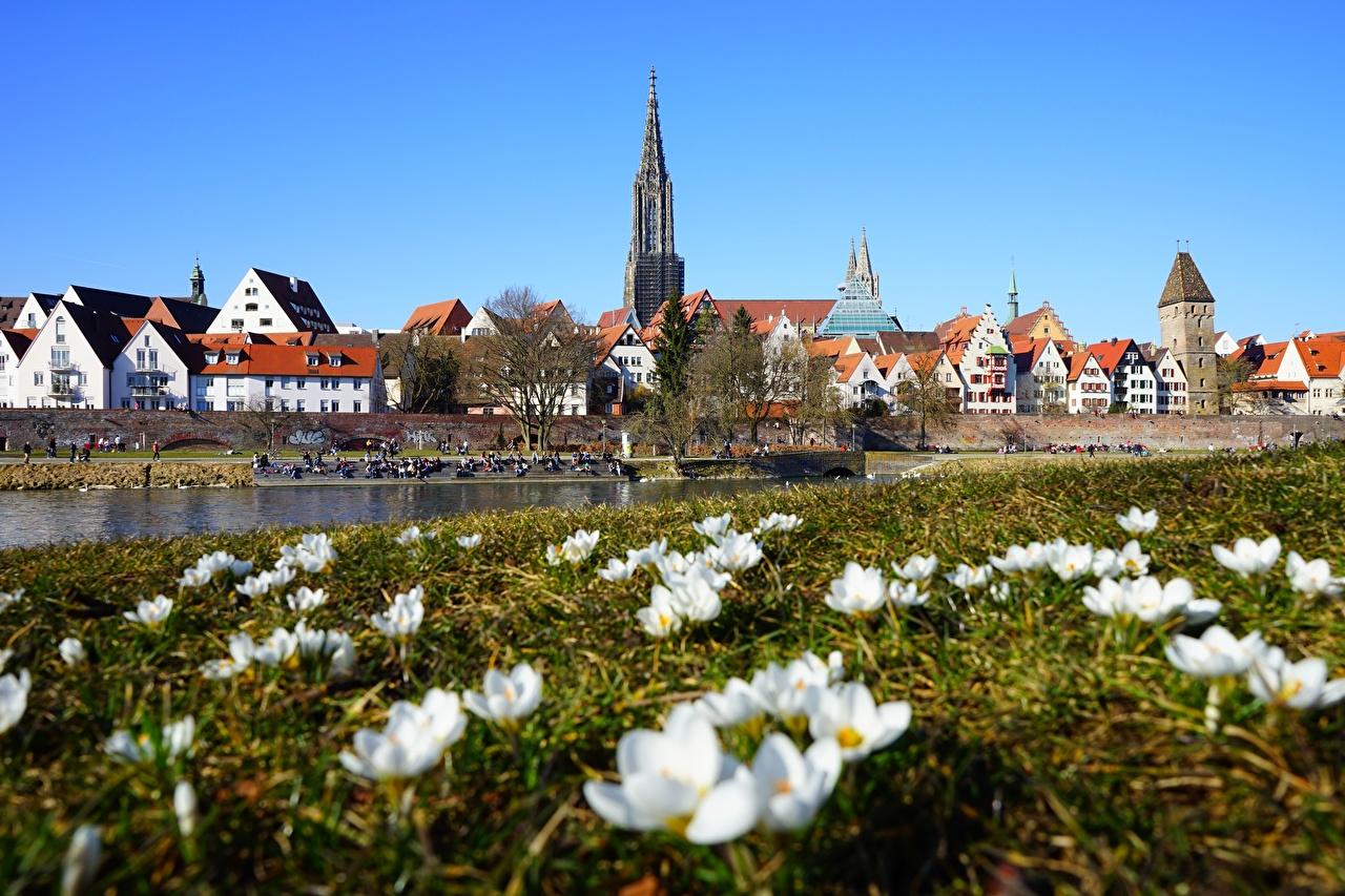 Desktop Hintergrundbilder Deutschland Frühling Krokusse Gras Städte