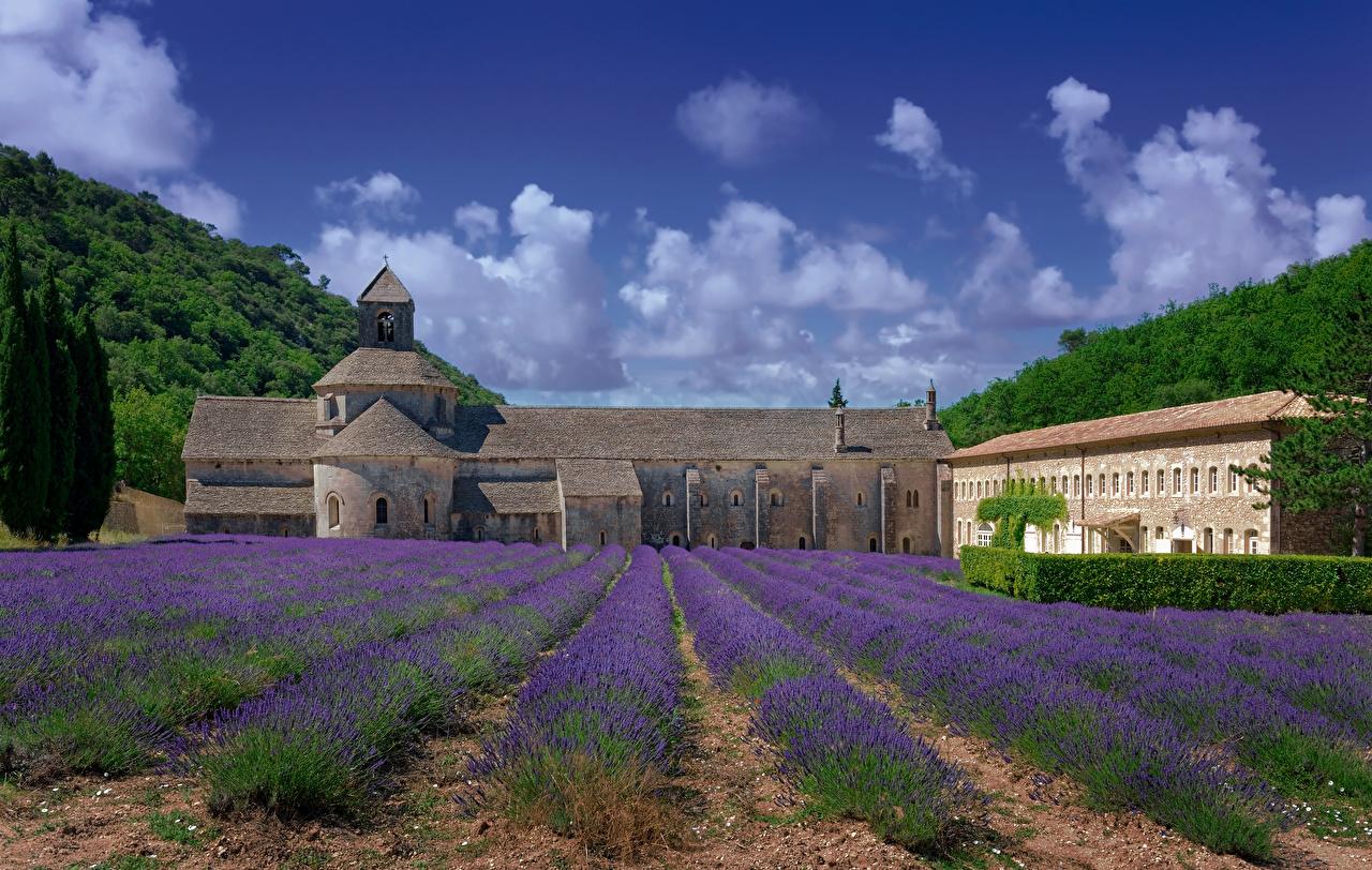 Fotos von Kloster Frankreich Senanque Abbey Natur Acker Lavendel Tempel Städte Felder