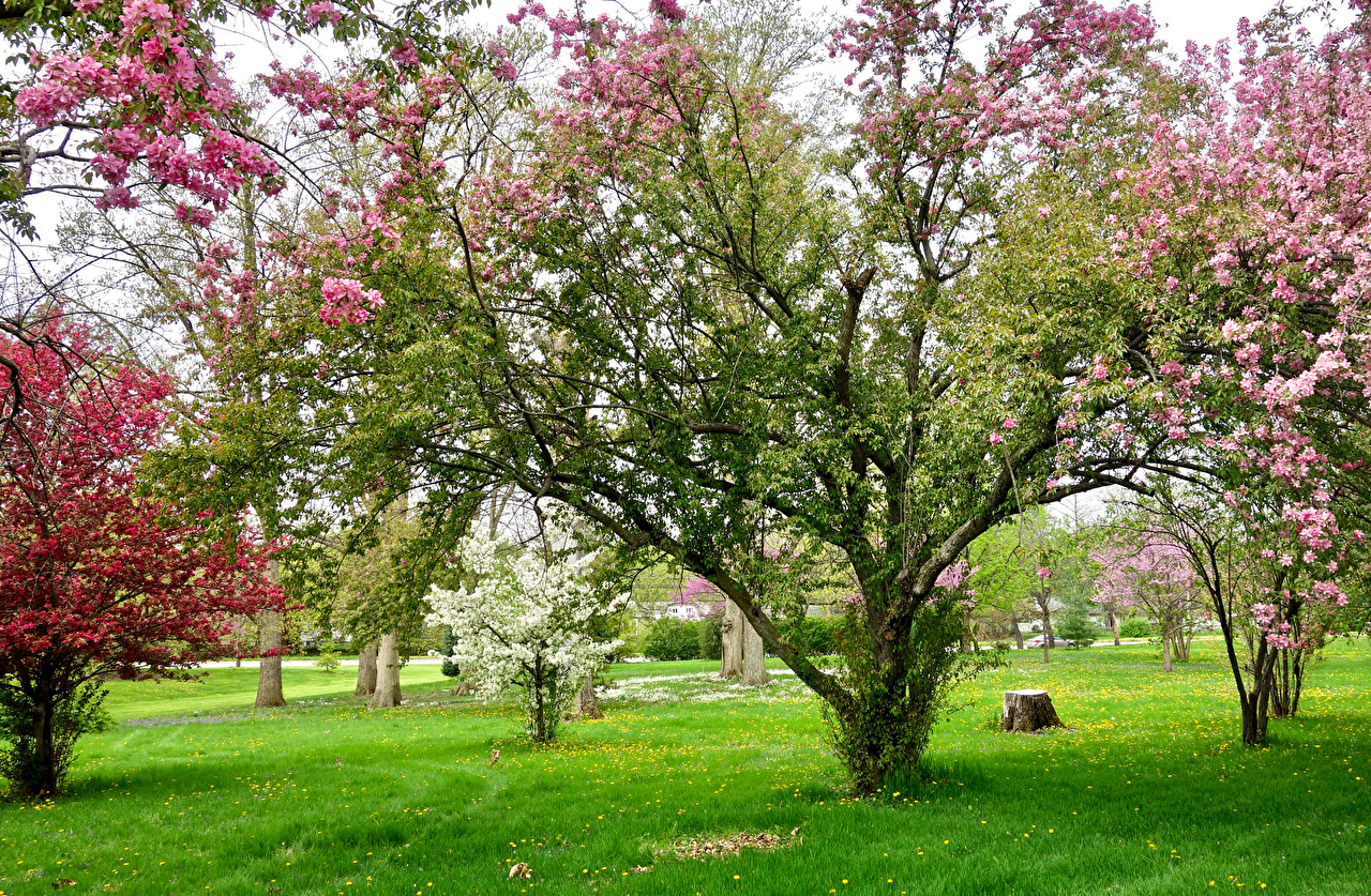 Picture Nature Spring Gardens Grass Flowering trees