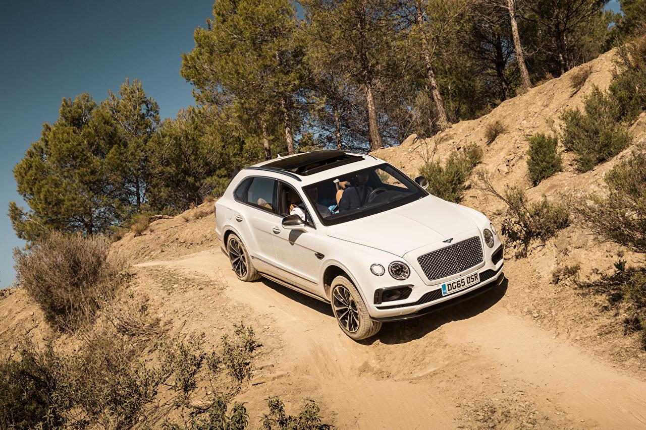 Wallpaper Bentley 2015 Bentayga White Cars auto automobile