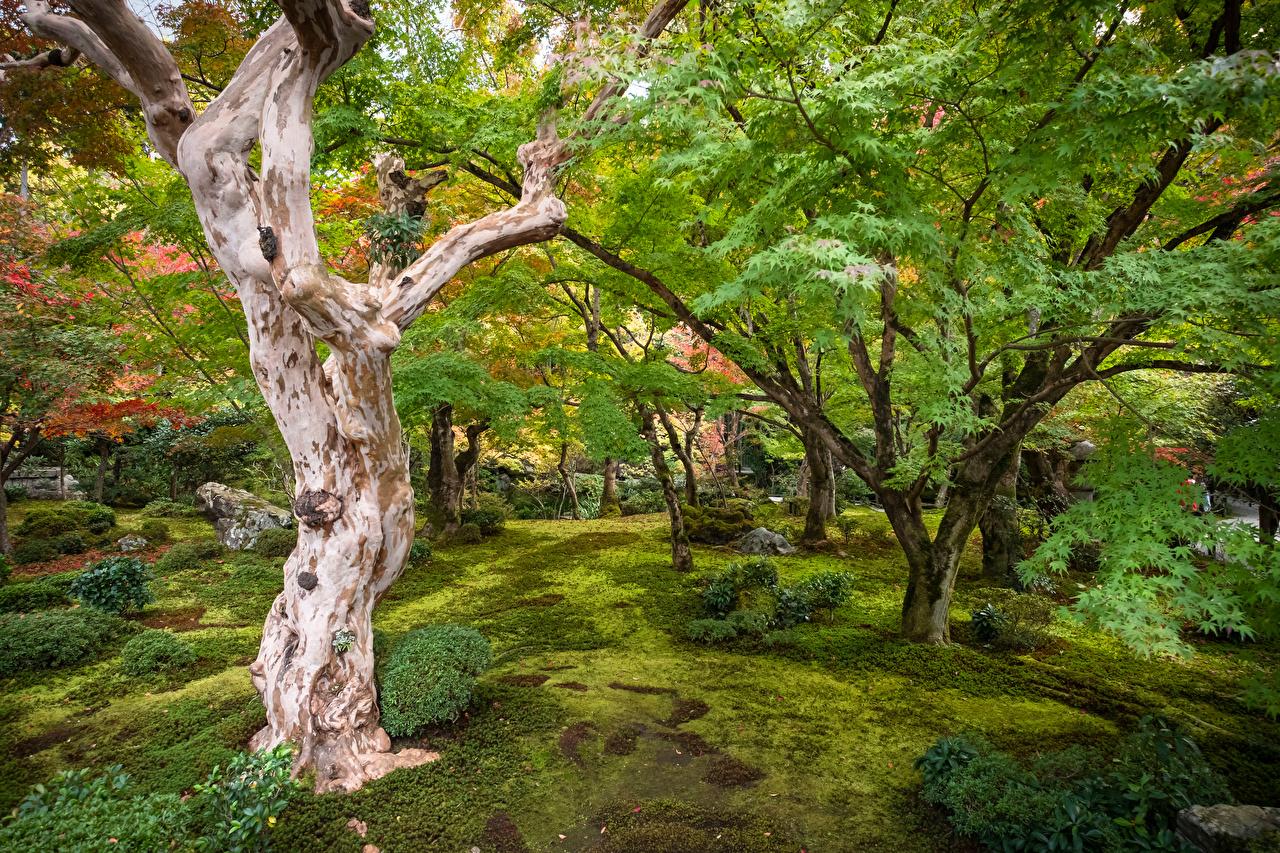 Desktop Wallpapers Kyoto Japan Nature Gardens Trees