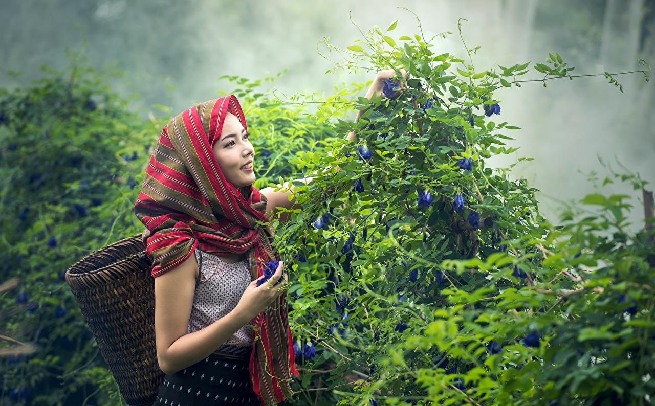 Bilder von Lächeln Nebel Mädchens Weidenkorb Asiatische Strauch