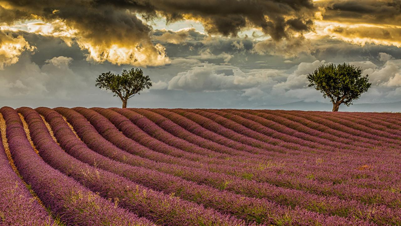 Bilder Natur Acker Lavendel Wolke Bäume Felder