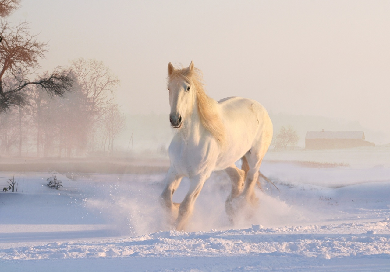 Image Horse White Winter Snow Animal