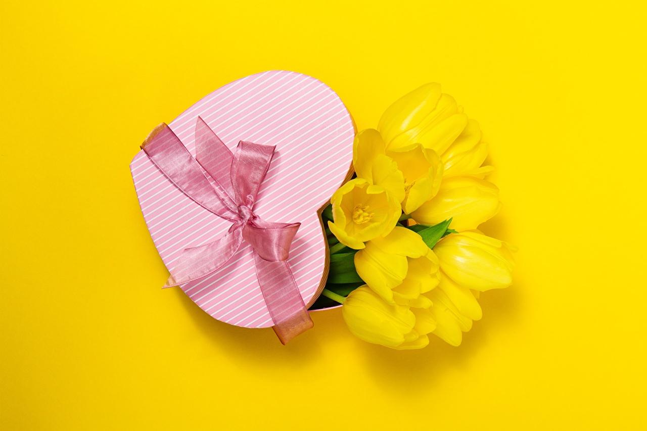 Saint-Valentin Tulipes Arrière-plan coloré Cœur Noeud de ruban Cadeaux fleur, tulipe Fleurs