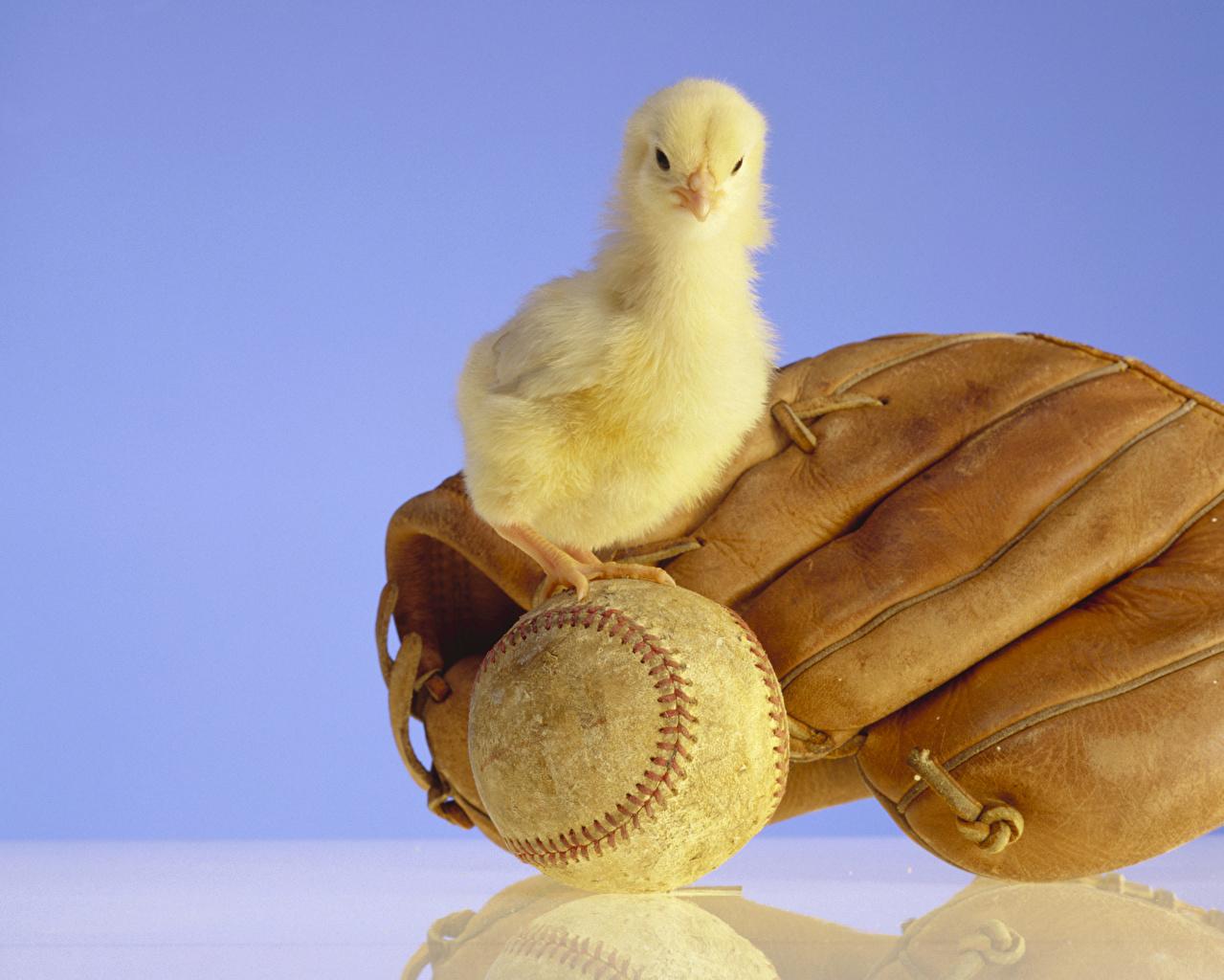 Fotos Vögel Hühner Handschuh Spiegelung Spiegelbild Ball Tiere Farbigen hintergrund