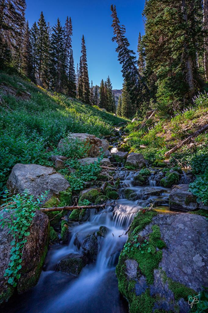 Bilder USA Utah Natur Bäche Fichten Steine Laubmoose  für Handy Vereinigte Staaten Bach Stein