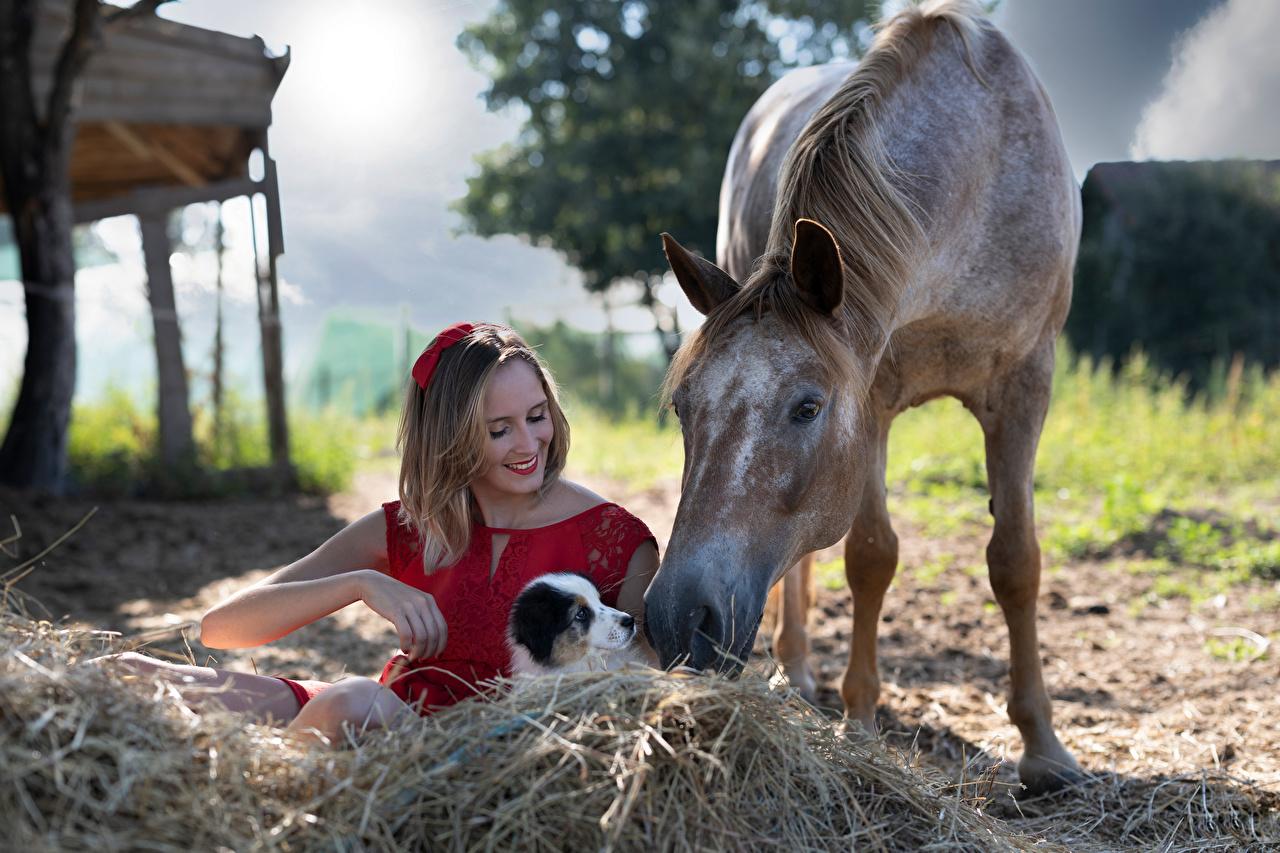 Cavalo Marion and Sissi Cachorrinho Sorrir Feno Sentados Vestido jovem mulher, mulheres jovens, moça, animalia, um animal, cavalos, filhotes, filhote de cachorro, sentada Meninas Animalia