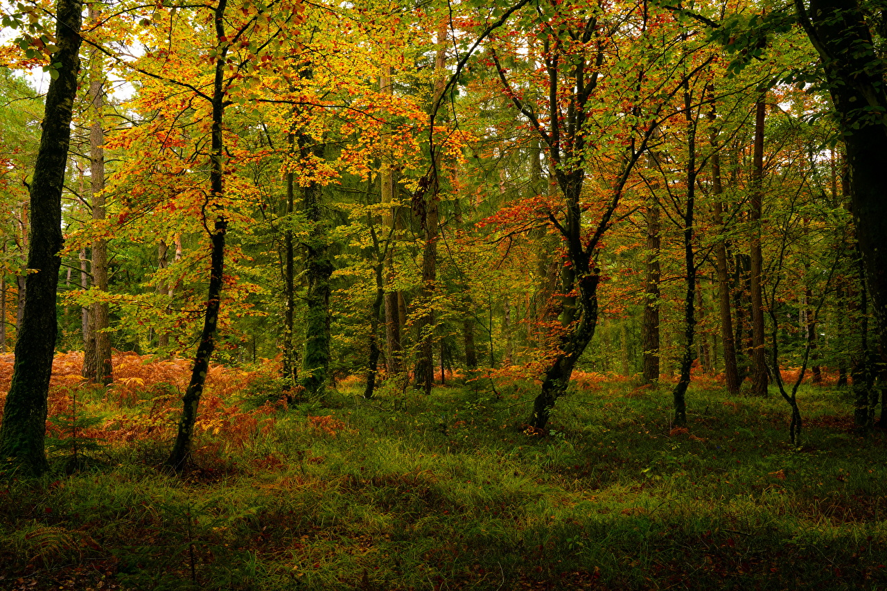 Picture Autumn Nature Forests Trees forest