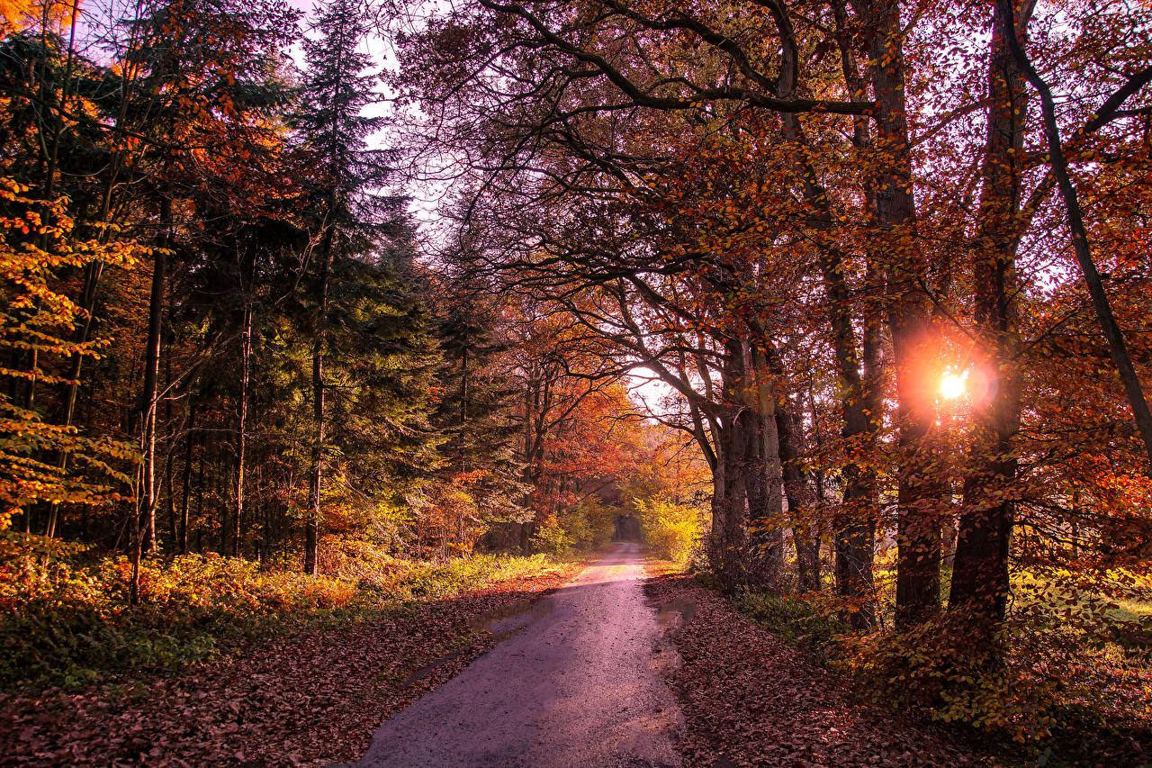 、森林、道、秋、木、木の葉、自然