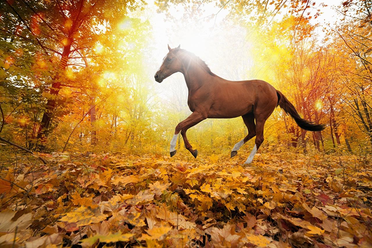 Kostenlos pferde desktop-hintergrundbilder Die 80+