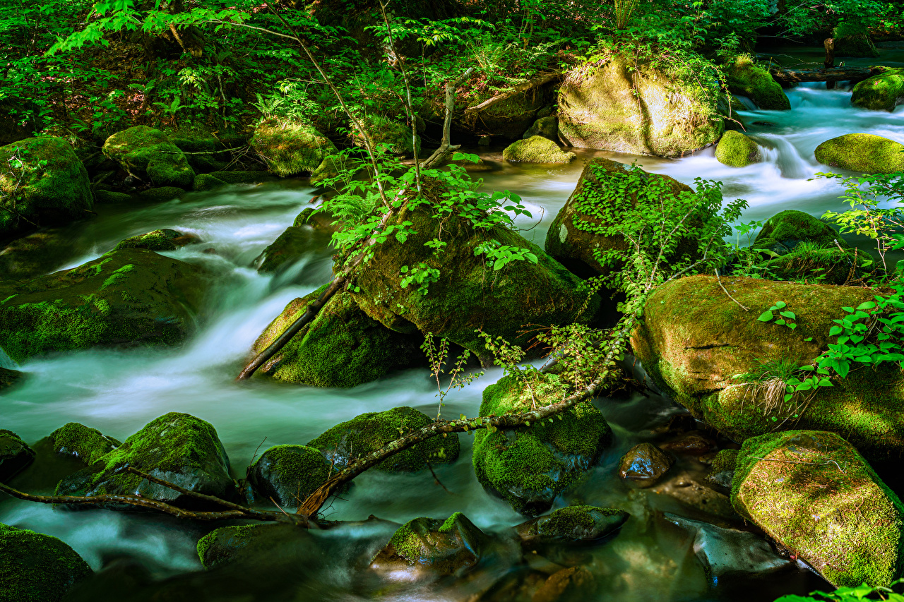 Picture Japan Oirase Mountain Stream, Towada Creeks Nature Moss stone Branches Creek brook Stream Streams Stones