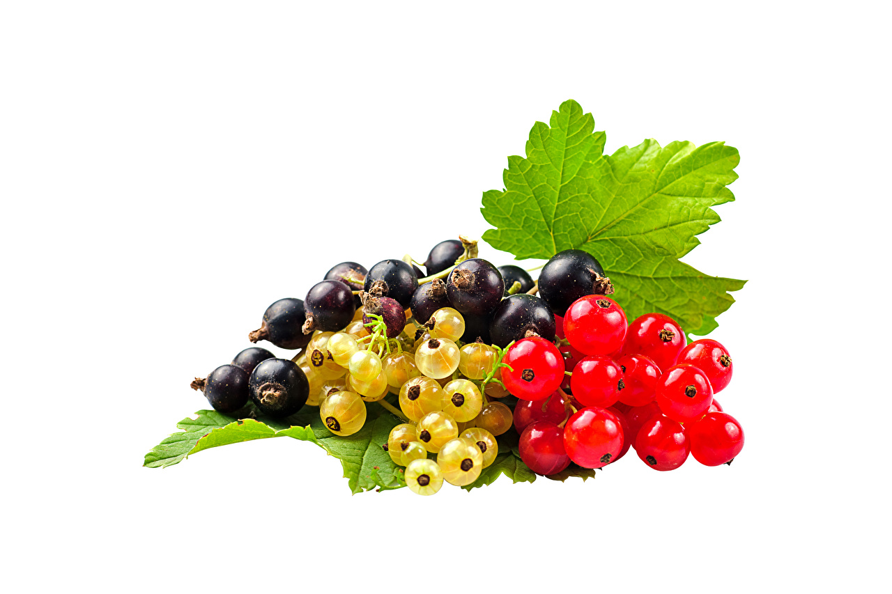 Pictures Leaf Red Black Currant Food Berry White background Foliage