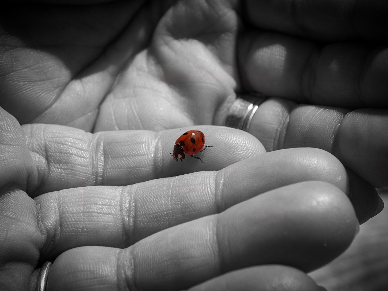 Bilder Marienkäfer Finger Tiere Großansicht