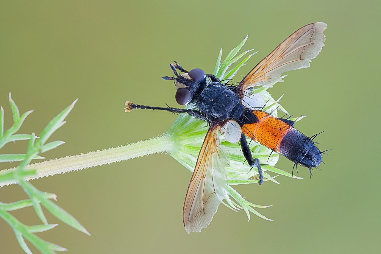 Foto's Vliegen Insecten Dieren van dichtbij vlieg een dier Close-up