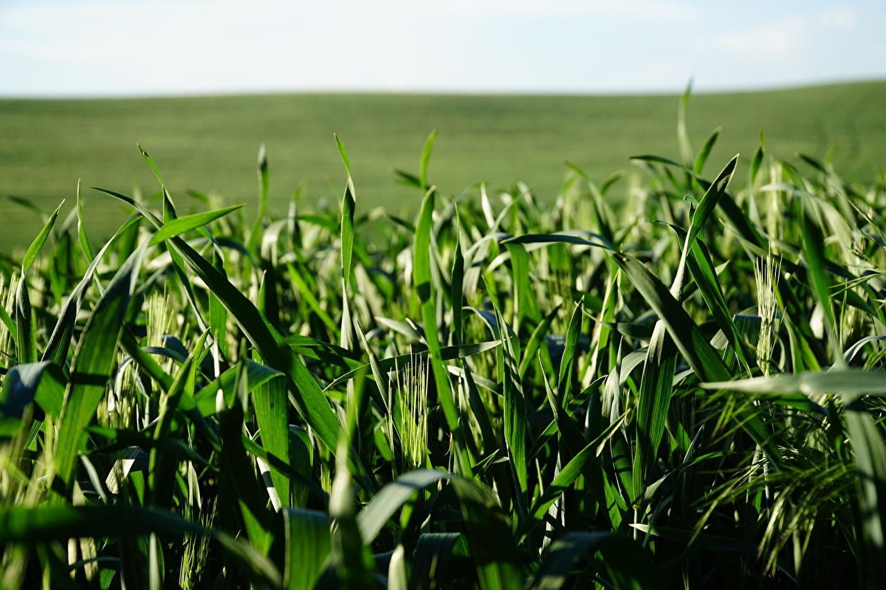 Fotos von Bokeh Grün Natur Gras unscharfer Hintergrund