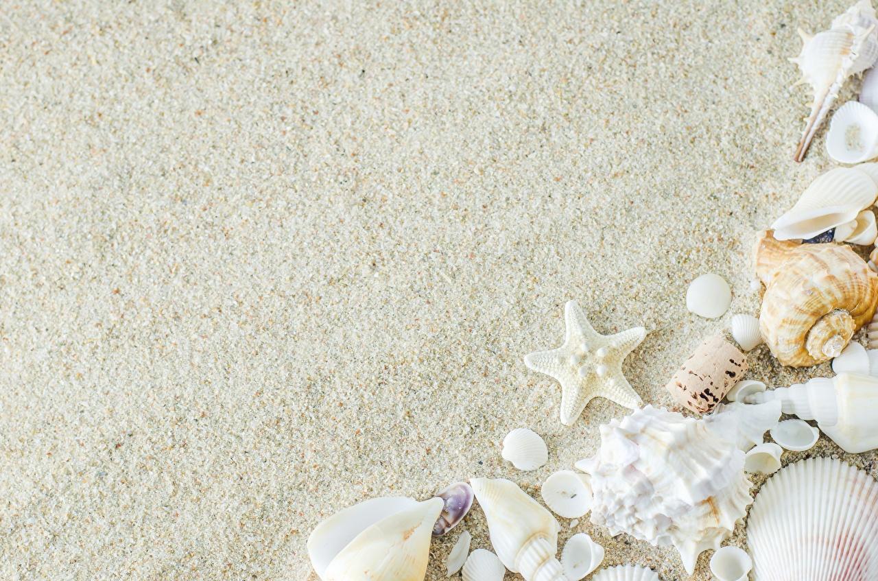 壁紙 貝殻 ヒトデ 砂 テンプレートグリーティングカード ダウンロード 写真