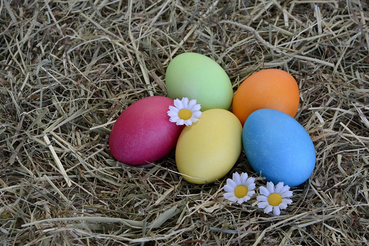 ,復活節,卵,七彩,乾草,食品,多色,食物,