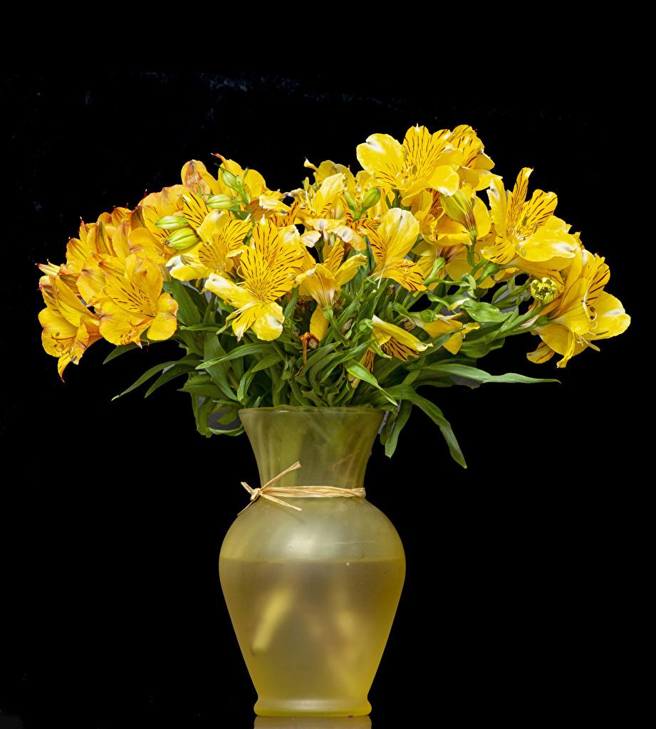 Foto Gelb Blumen Alstroemeria Vase Schwarzer Hintergrund Blüte Inkalilien