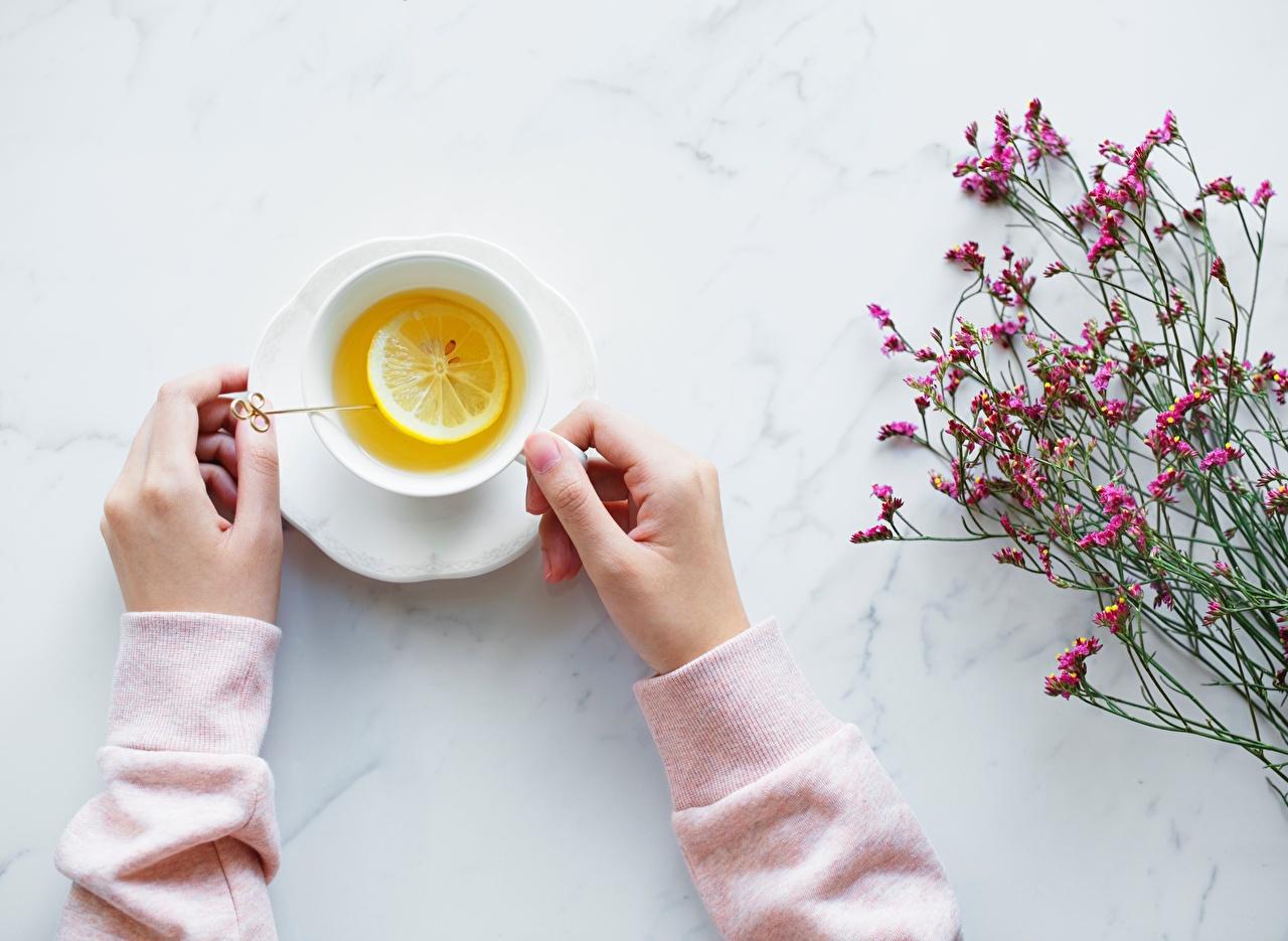 Pictures Tea Lemons Cup Food Hands
