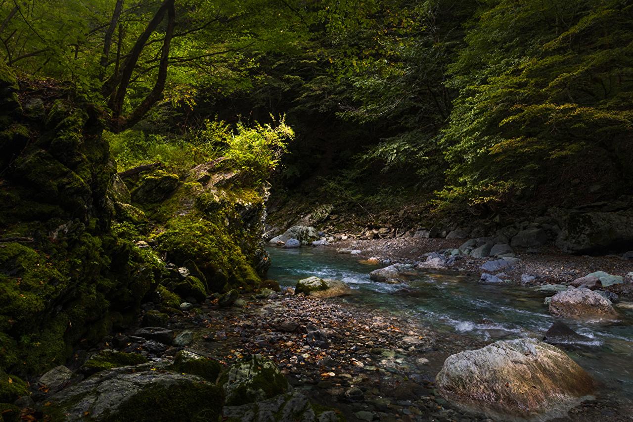 Images Japan Iya Valley Creeks Nature Moss stone Creek brook Stream Streams Stones