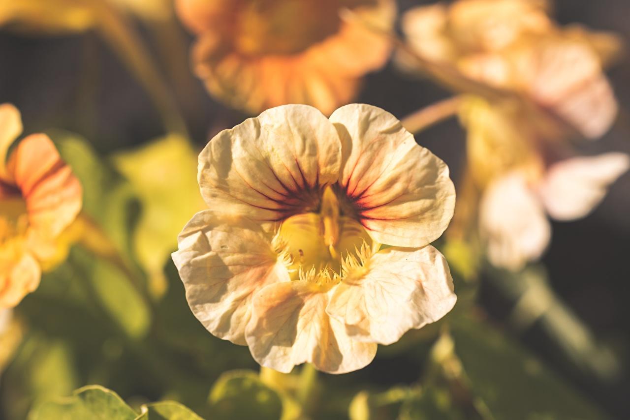 Fotos von Bokeh Blumen hautnah unscharfer Hintergrund Blüte Nahaufnahme Großansicht