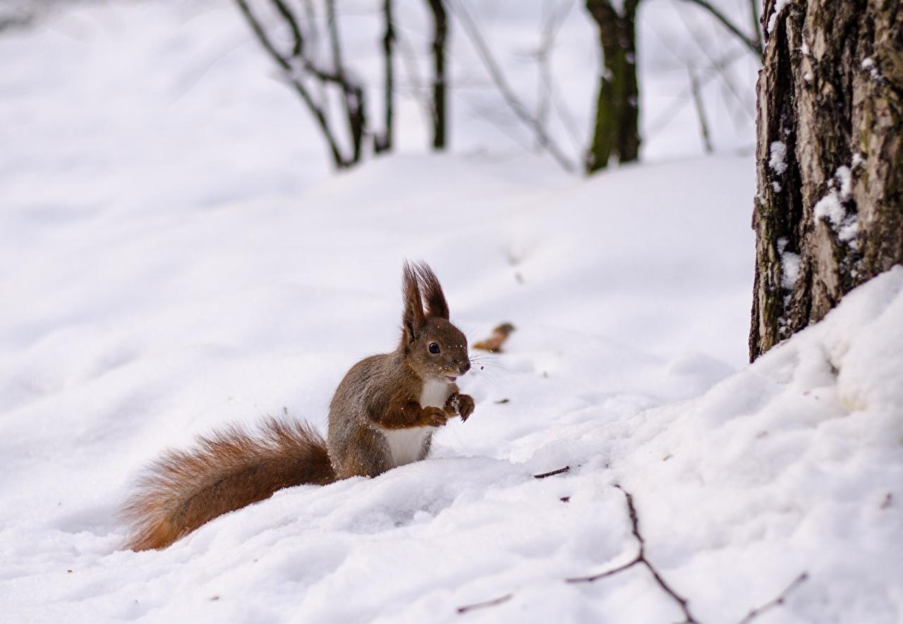 Hintergrund winter tier