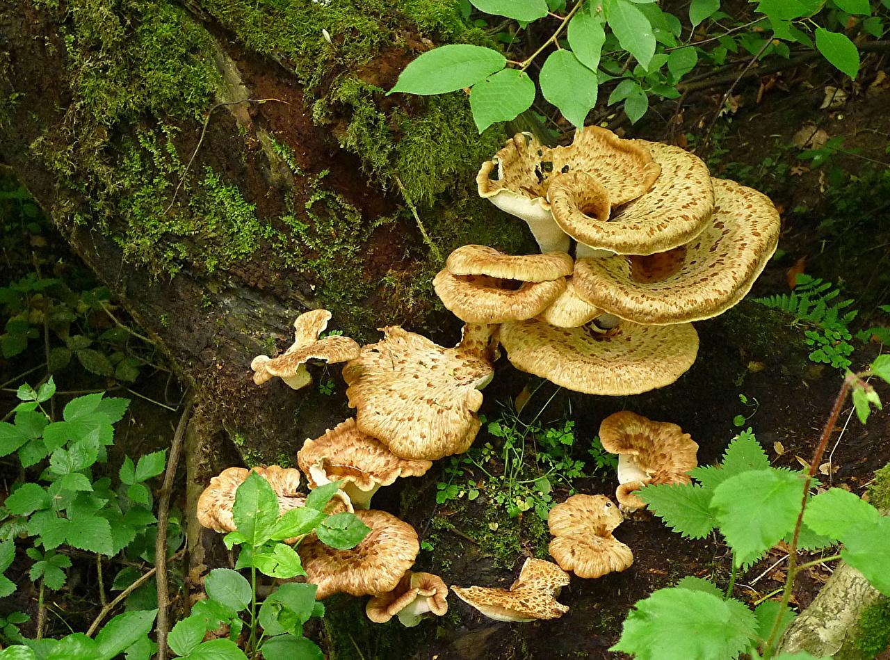 Wallpaper Nature Mushrooms nature