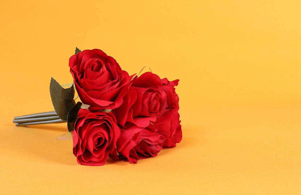 Bilder Sträuße Rot Rosen Blüte Farbigen hintergrund Blumensträuße Rose Blumen