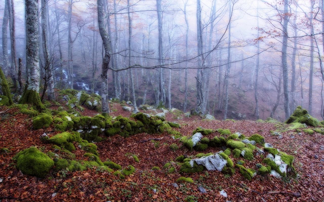 Bakgrunnsbilder Tåke Natur skog Moser Trær skodde Skoger Bladmoser