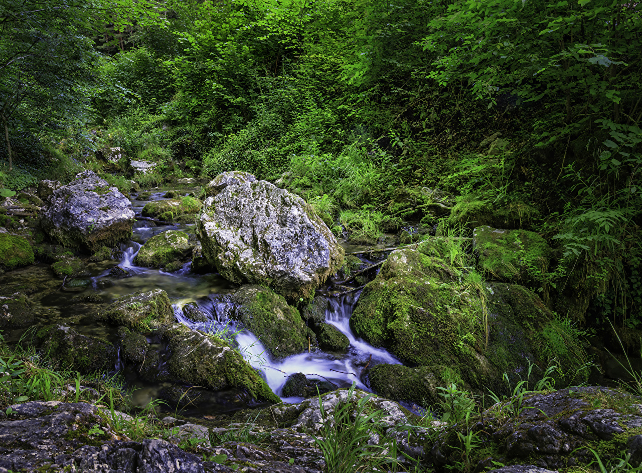 Images Austria Muggendorf Creeks Nature Moss Stones Creek brook Stream Streams stone